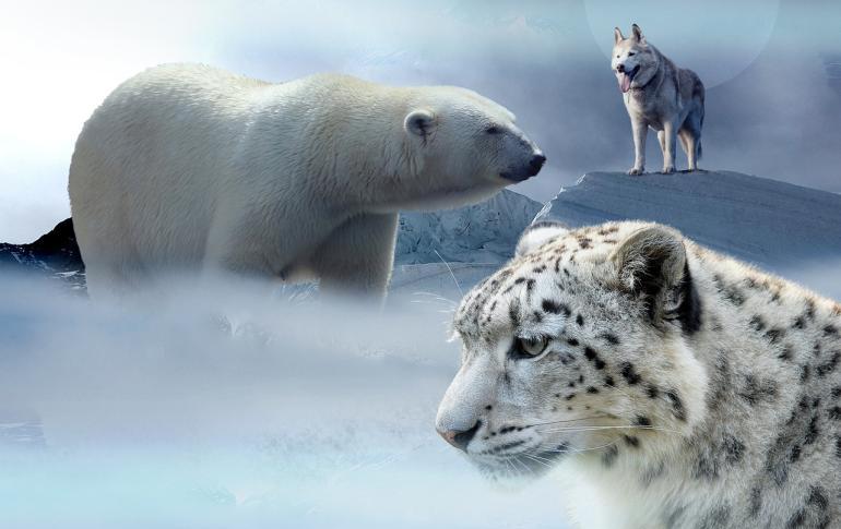 Hayvanlar üşür mü- kutup ayısı