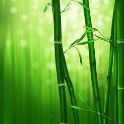 bambu ağacının öyküsü - bamboo - bambu ağacı nasıl yetiştirilir