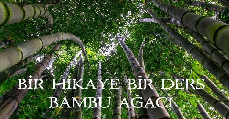 bambu ağacı hikayesi - bamboo - sabır - çocuk yetiştirme - bambu ağacı yetişmesi - bir hikaye bir ders